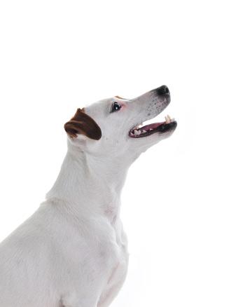 aufschauender Hundekopf