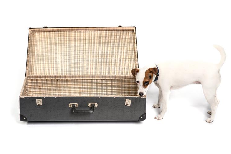 Hund steht vor einem Urlaubskoffer